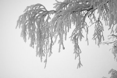 The frozen tree
