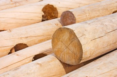 Logs for house building