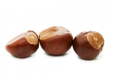 Brown chestnut nut closeup isolated on white background