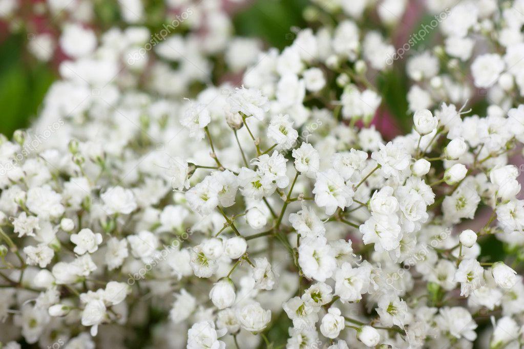 kleine weiße blumen — Stockfoto © AGorohov #4601537