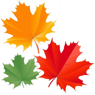 Set of colorful maple leaves clip art vector