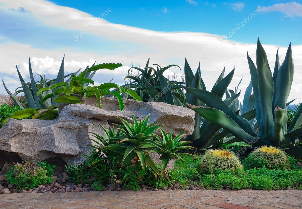 A brick path in the garden with cacti, palm trees against the blue sky with