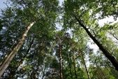 sulle cime degli alberi