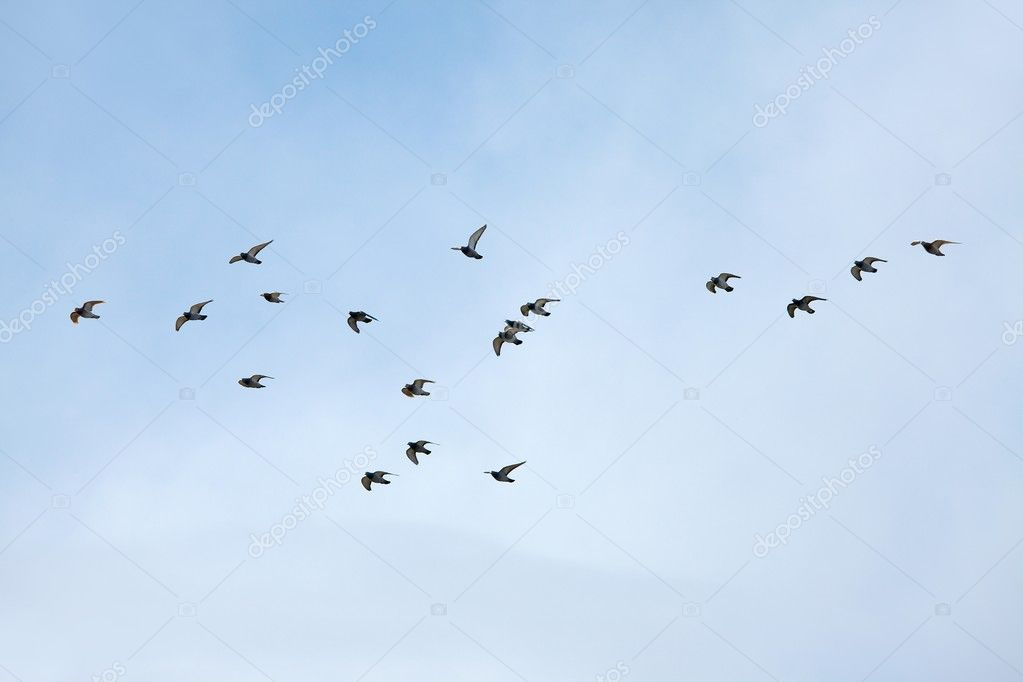 Flying Birds Free Stock Photos Download 3 416 Free Stock: Stock Photo © Gudella #5334886