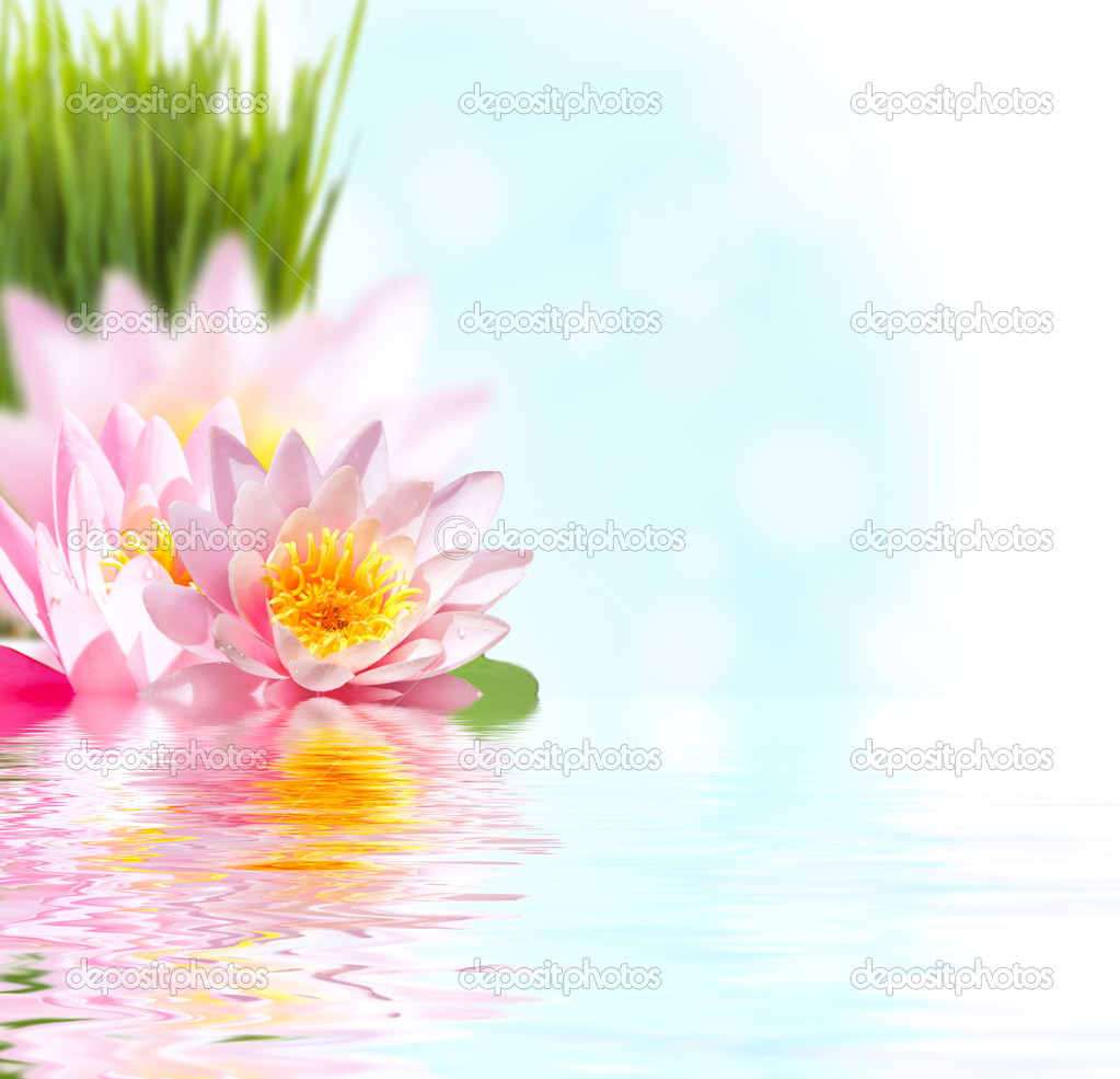 Pink lotus flower floating in water stock photo miolana 4716729 beautiful pink lotus flower floating in water photo by miolana dhlflorist Images