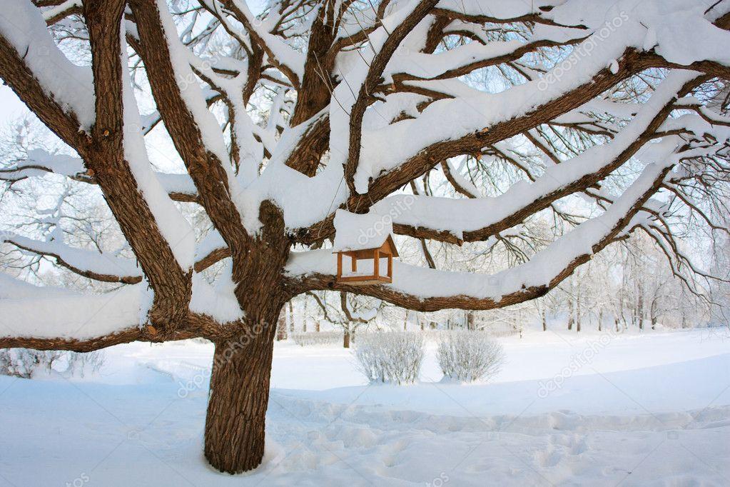 Winter, feeding trough for birds on a tree