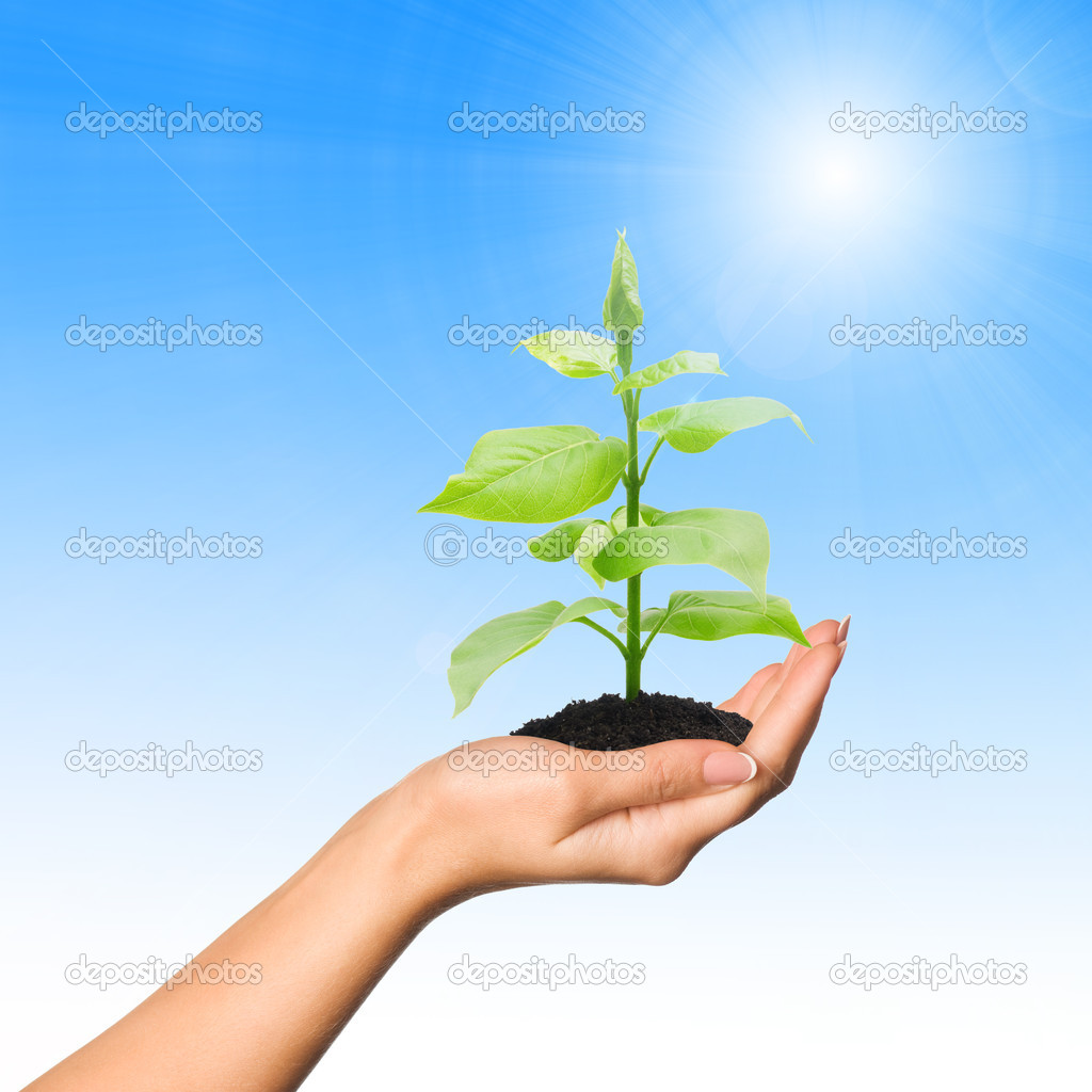 Hand with plant