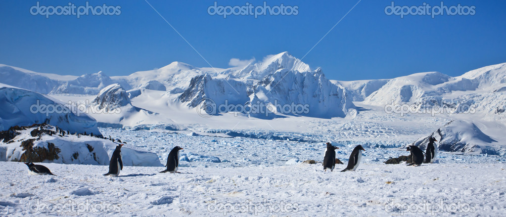 A large group of penguins