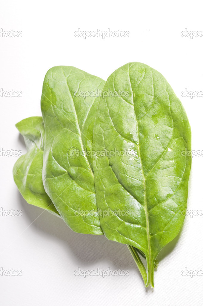 Fresh spinach leaves over white