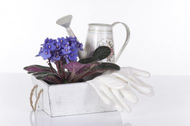 Concept still life with violet viola, gloves and watering can