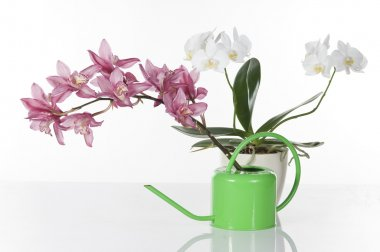 Beautiful orchids over white background