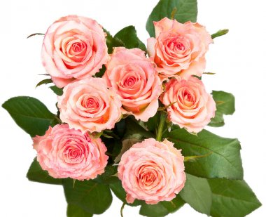 A bouquet of roses, top view, isolated on a white background