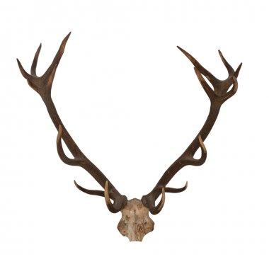 Horns of an animal