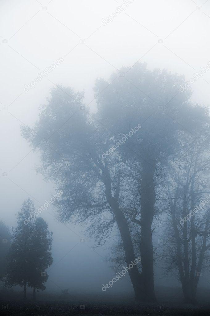 Tree in a fog.