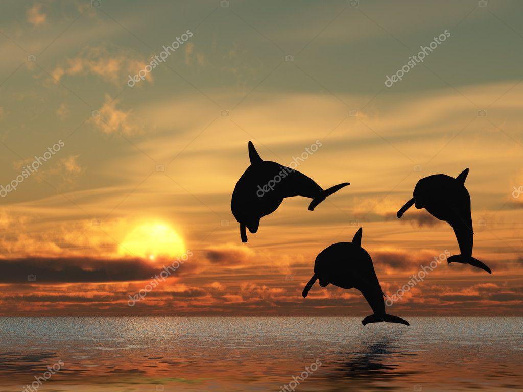Dolphin And Sunset Stock Photo C Galdzer 4192692