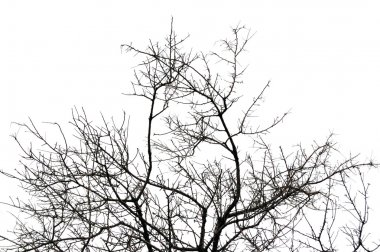 Leafless tree branches silhouette