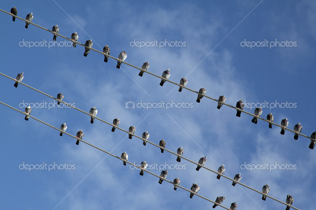 Vögel auf elektrischer Draht — Stockfoto © pulen2811 #4333377