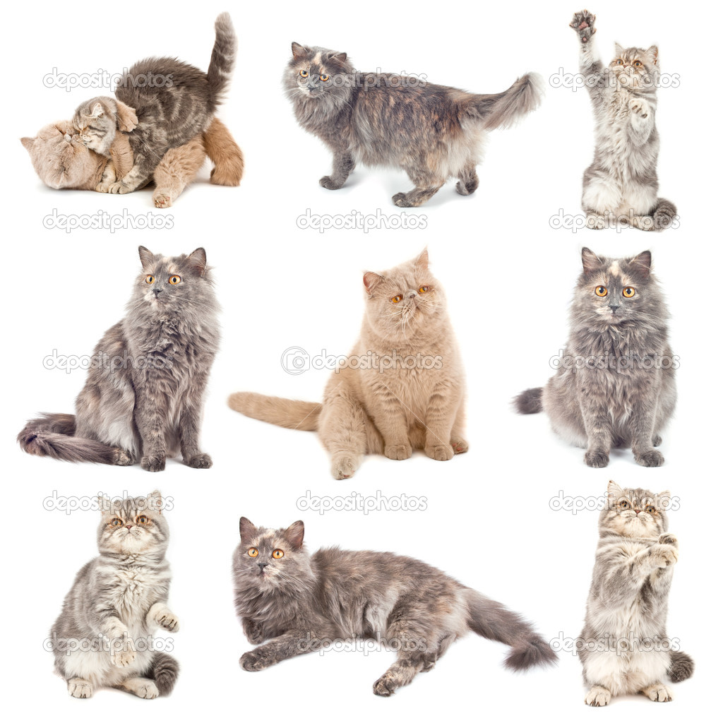Cats in different poses