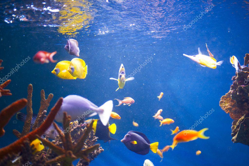 сонник рыбы в аквариуме плавают духи обладают