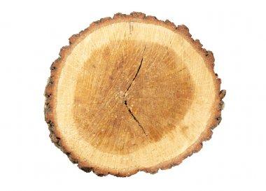 Wooden stump isolated on white.