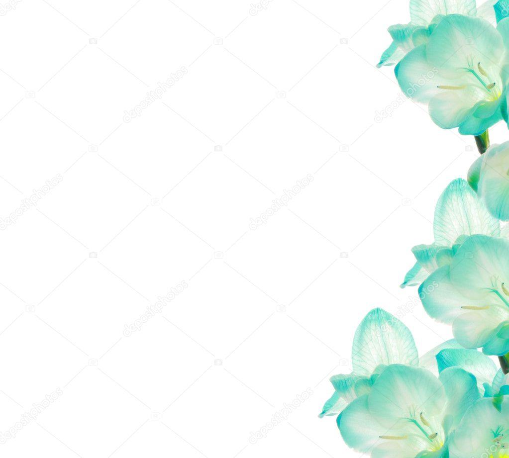 Fresia flower - border design