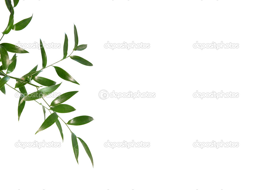 Beautiful green leaves isolated on white background