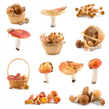 Set of mushrooms