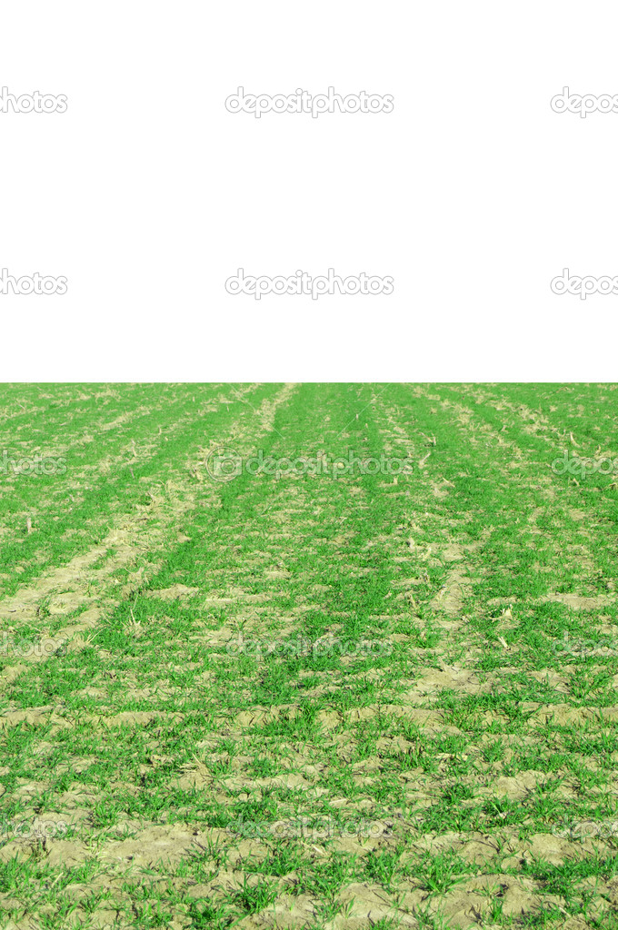 Grassy field stock photo robeo123 5369639 a large grassy field on a sunny day photo by robeo123 voltagebd Images