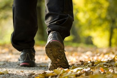 Hiking in autumn forest, exercise outdoors