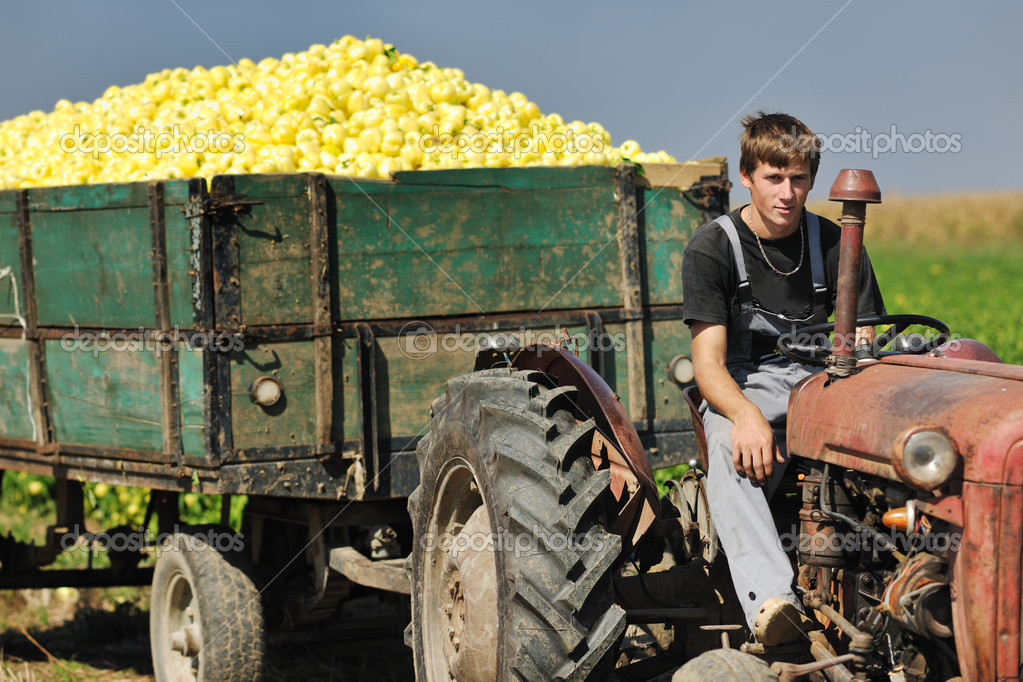 Agriculture worker with fresh vegetables