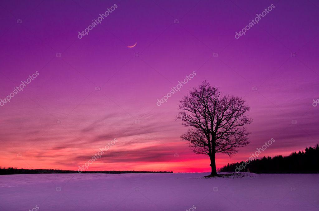 Idyllic sunset in the field stock vector