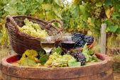 vinice s červené a bílé víno
