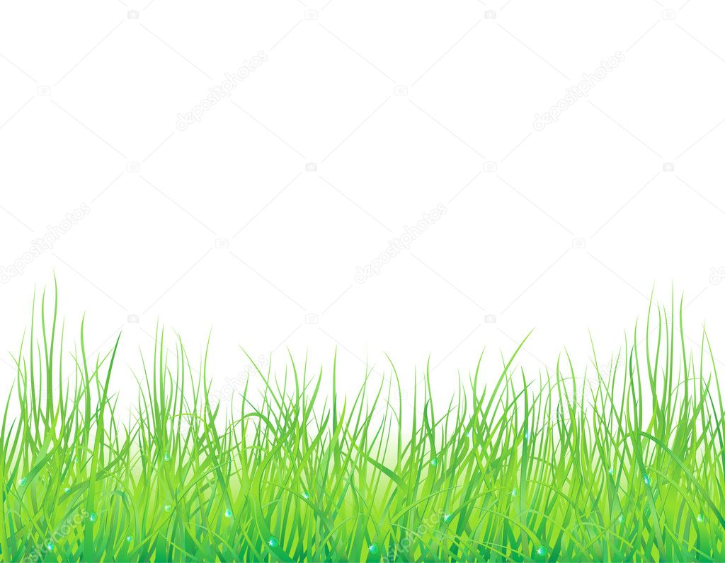 Background with the grass and drops