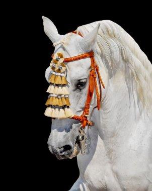 Grey andalusian horse spanish decoration