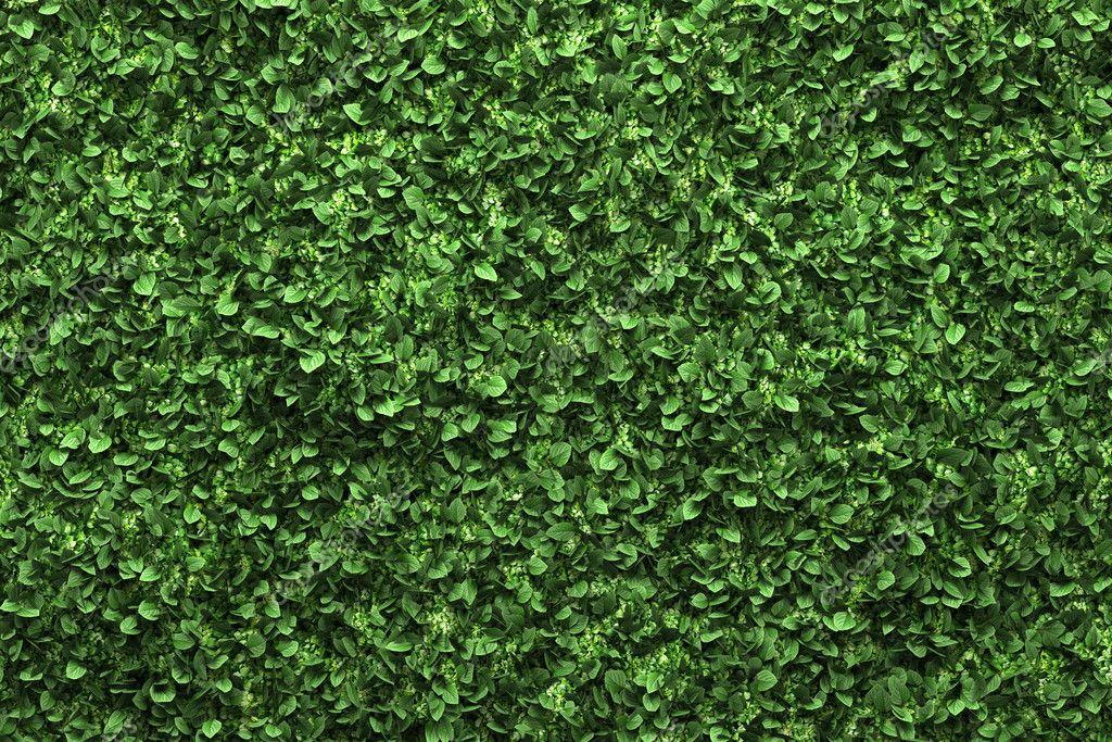 Green box hedge background with green leaves