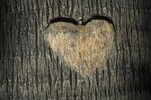 Fotografia cuore intagliato in un tronco dalbero