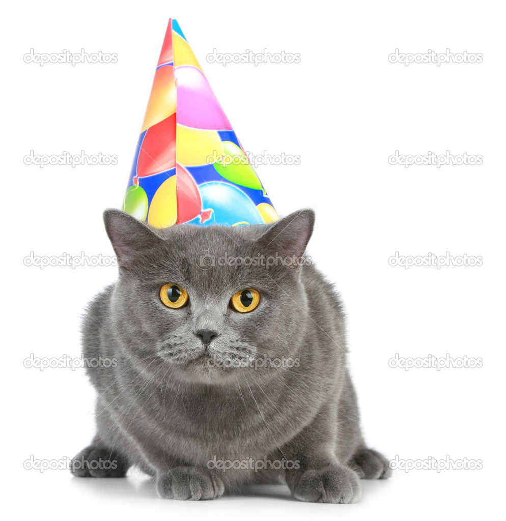 British Cat With Birthday Party Hat On A White Background Photo By