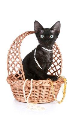 Devon-rex cat portrait in wattled basket with beads