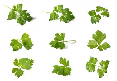 Assorted parsley
