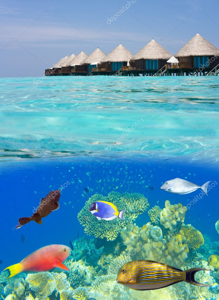 Water villas and the underwater world with small fishes in corals