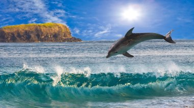 The dolphin jumps out of waves at ocean