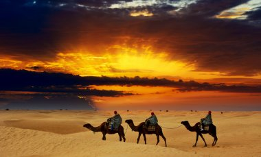 Camel caravan going through desert at sunset
