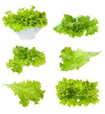 Set with lettuce salad