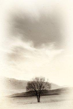 "Картина, постер, плакат, фотообои ""изображение стареющего дерева постеры плакаты"", артикул 4601515"