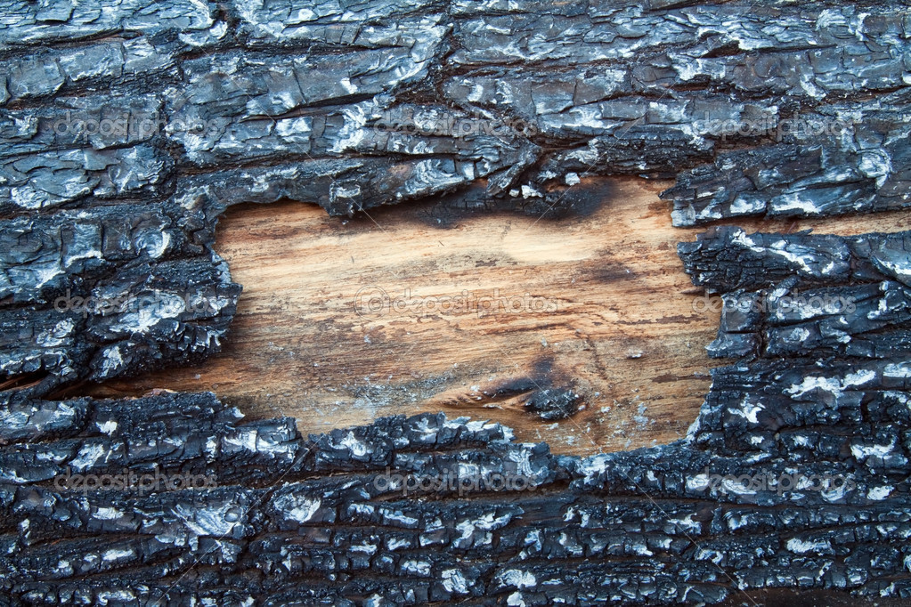 Structure of a burned tree