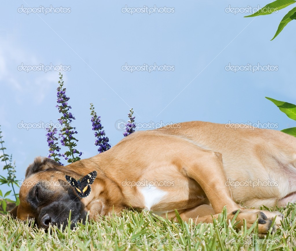 Dog Snoozing in a Field of Flowers