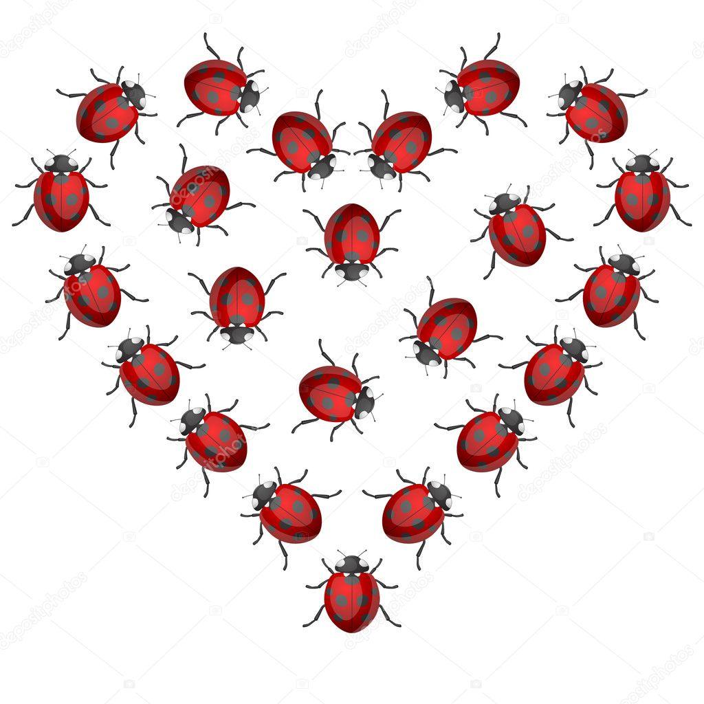 Ladybird heart
