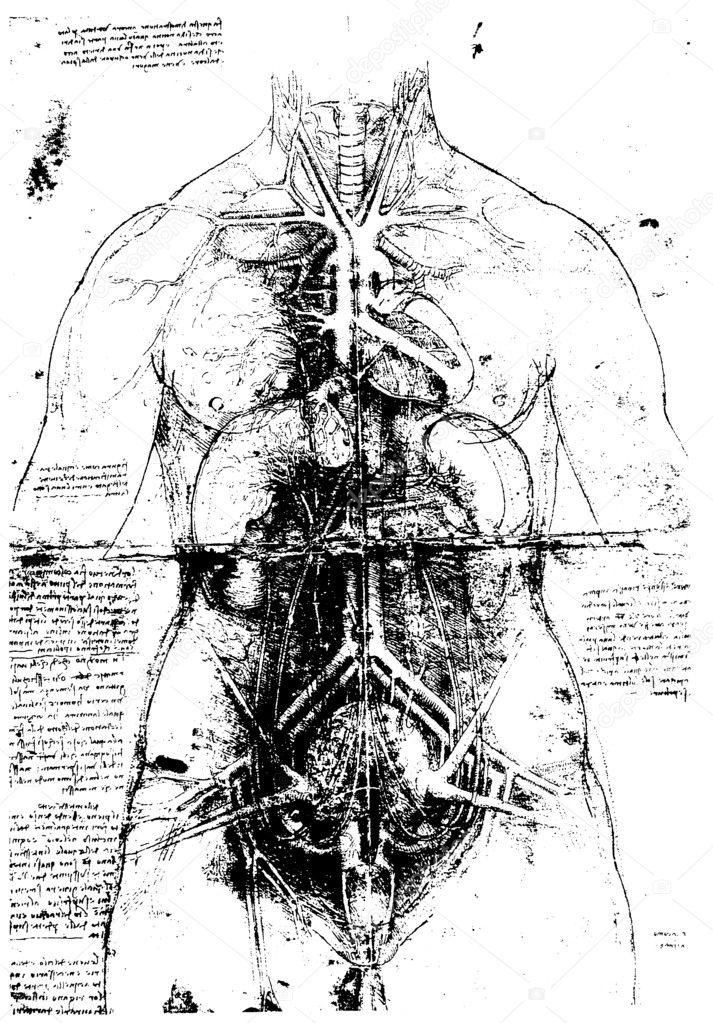 vitruvianische Mensch von Leonardo da vinci — Stockfoto © janaka ...