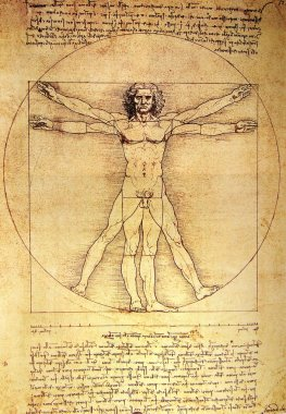 Photo of the Vitruvian Man by Leonardo Da Vinci