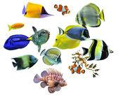 Skupina ryb